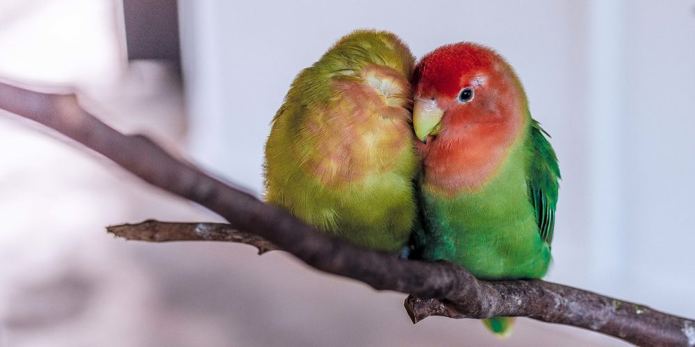 Selecting The Right Bird Pet For Your Child